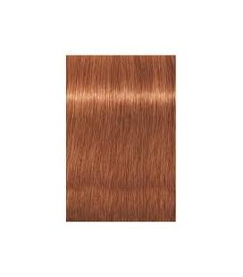 Крем-краска 8.43 Indola PCC Светло-русый медный золотистый 60 мл